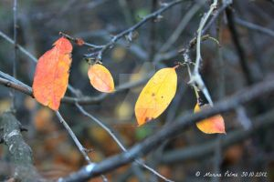 Autumn is on fire. by MarinaPalme