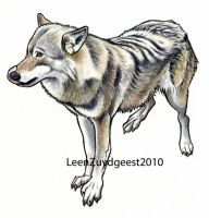 Northern European wolf by LeenZuydgeest