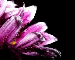 Pink droplets_4 by Mixdown13