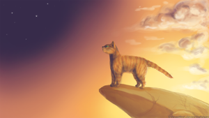 Firestar looks up at Starclan by Drekalder