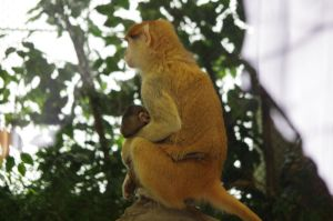 Patas monkey by Silver-she-wolf-14
