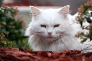 white fluffy neighbour II by O-Gosh