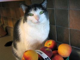 Adobe Peaches by cat-lovers