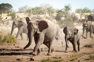 Elephants on the move by BenjaminF84