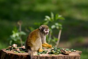 Squirrel Monkey by TakeMeToAnotherPlace