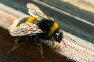 Bee 2 by Jagman48