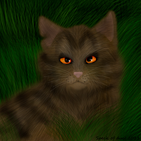 Tigerstar again by Speck--Of--Dust