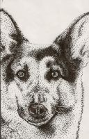 German Shepard Stippling by Cat-tale