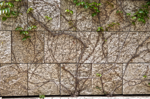 Ivy Wall Texture 01 by Just-A-Little-Knotty