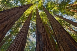 Muir Woods Foliage II - Free High Res HDR Stock by somadjinn