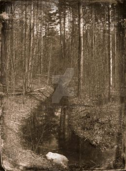 The Forgotten Forest #4 by Erinle