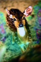 Bambi in Colors by Sina-Rose