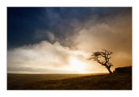 My Lonely Tree Photo by didumdidum