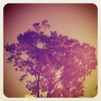 234 Tree by DistortedSmile