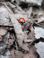 Ladybug 2 by rainbow-world