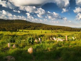 Meadow by MartinGollery