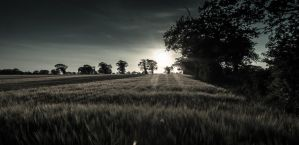 Wheatfield dusk by Woodi-e