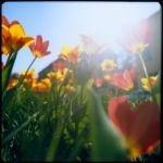 Spring, Sun and Tulips by PoLazarus2
