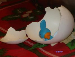 I Hatched a Mudkip by Jannelle-sama