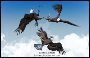 Eagle fight - refrenced by zavraan