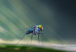 Lonesome fly by diensilver