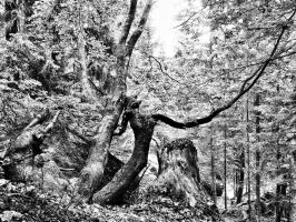 Foppiano wood by EltonTurkey