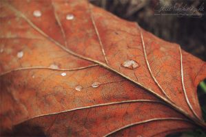Autumn Leaf by Estelle-Photographie