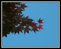 red leaves by NikonCha