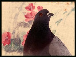 pigeon by elenista