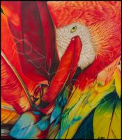 Scarlet Macaw by OzVisual
