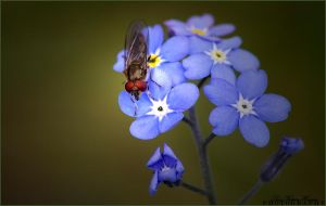 Bug on flower by LineKatrin