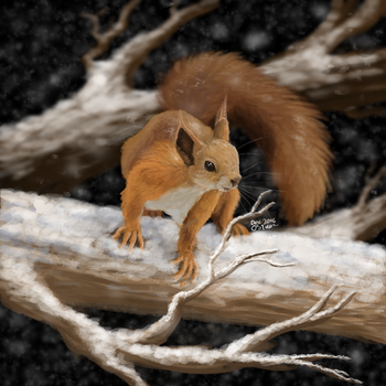 Winter squirrel by Olivitree