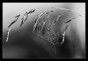spiderweb by tfprince