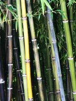 Black and Green Bamboo by designdiva3