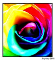Rainbow Rose Heart by crystalfalls