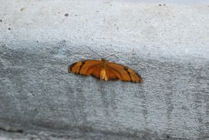 Orange Butterfly by xxtgxxstock