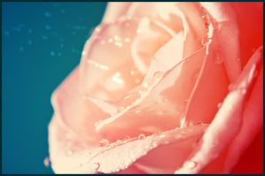 Rose and the blue. by Edmonam