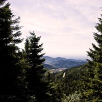 Window Of Trees. by marc-bruno