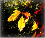 Vine Leaves in Autumn by surrealistic-gloom