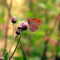 Small Butterfly by xBarbaraG