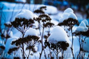 Crowned with snow 2 by Britwitch-1981