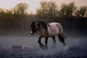 Phixation by adverbial-spectra