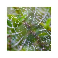 spiderweb by nicolehinrichs