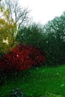 first snow.. by Mirey-chan