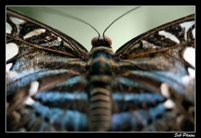 Butterfly's back by Seb-Photos