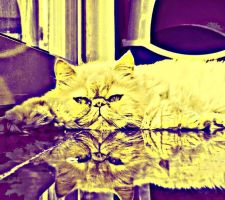 Reflection of a Cat by DaniiBuh