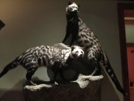 African Civets by Skybird99
