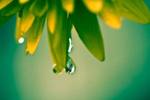 Raindrop by mairlin