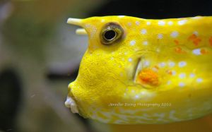 Longhorn Cowfish 2 by MorrighanGW