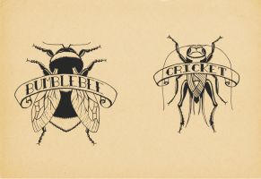 Insects by CarolineSalinas